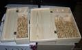木製酒盒 木酒箱 4