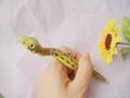 创意型蛇笔 3