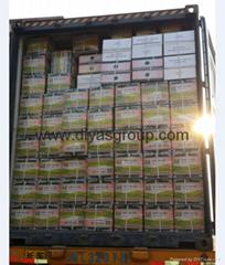 gunpowder green tea 9375