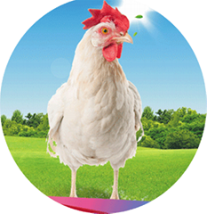 Lipase Enzyme for Animal Nutrition Feed