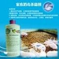 家禽消毒杀菌剂