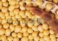Soybean P. E 1