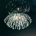 Pistillo吊燈