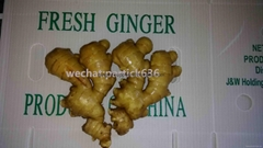 All Year Round, We Export Ginger