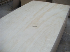 Construction Plywood,Pin