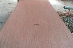 Red Bintangor Plywood/Ok