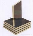 WBP Glue Black/Brown Film Face Plywood