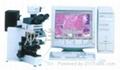 显微图像分析系统