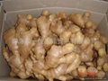 FRESH AIR DRIED GINGER