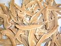 Ganoderma lucidum 4