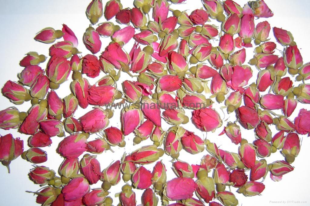 玫瑰花 2