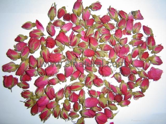 玫瑰花 3