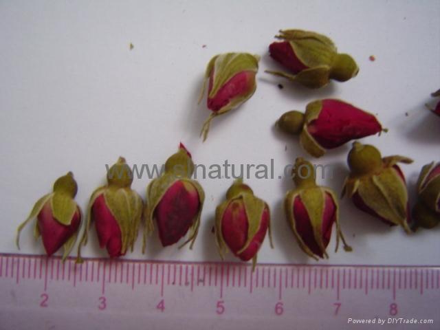 Rose Flower 4