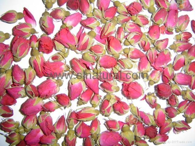 玫瑰花 1