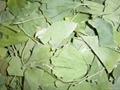Ginkgo Biloba Leaves P.E. 2