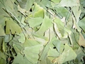 Ginkgo Biloba Leaves P.E. 3