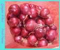 ORGANIC FRESH RED ONIONS 4