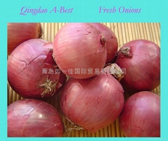 2019 NEW FRESH PINK ONION