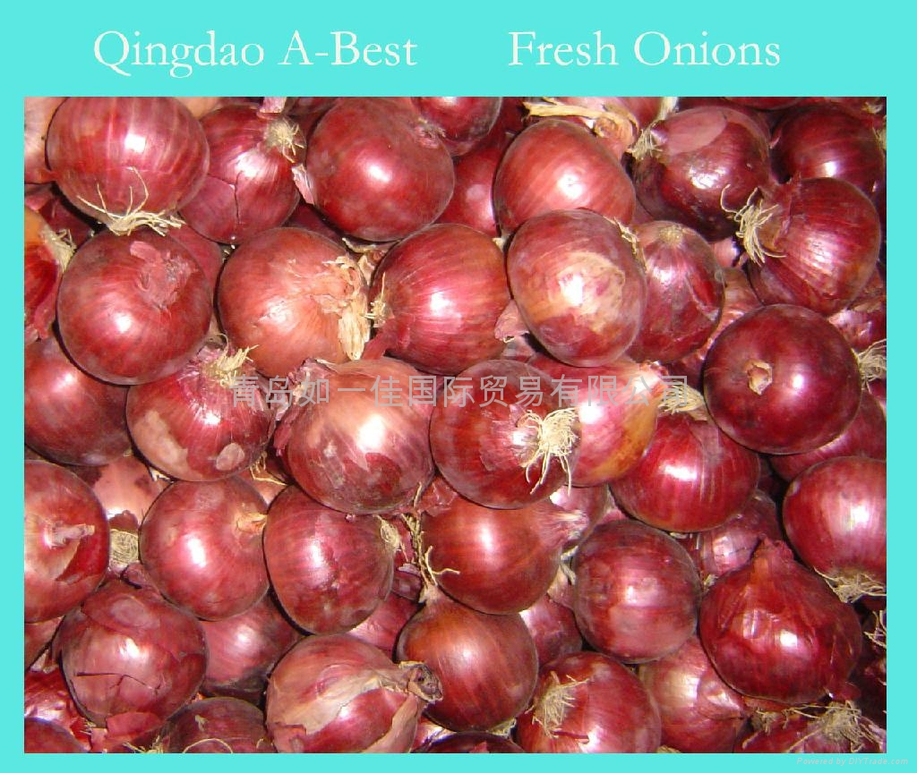 2019 NEW CROPS FRESH RED ONION 1