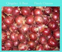 NEW CROPS FRESH RED ONION