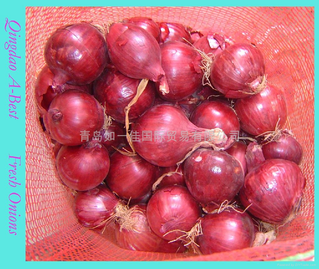 2019 NEW CROPS FRESH RED ONION 4