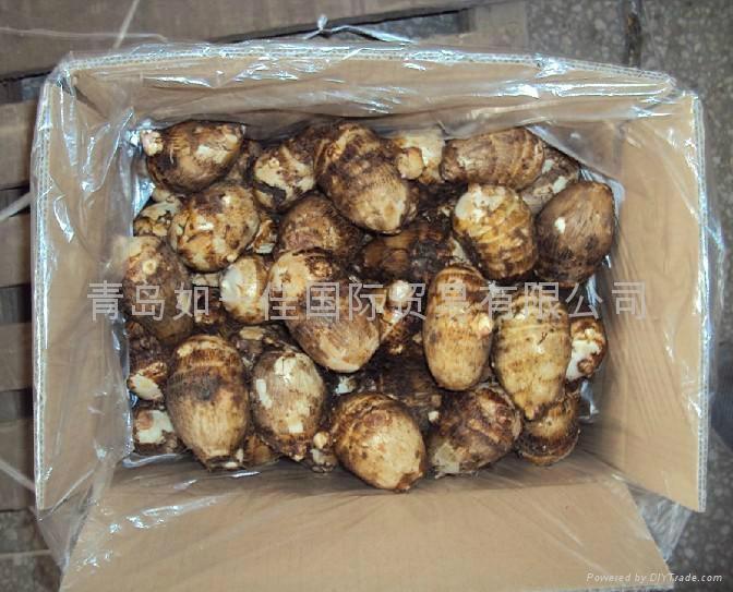 CHINESE FRESH TARO 2