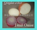 NEW CROPS FRESH RED ONIONS 6