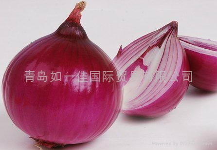 NEW CROPS FRESH RED ONIONS 8