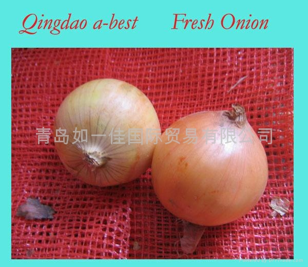 2017 NEW CROPS FRESH RED ONION 5