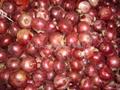 RED ONION BULBS 4
