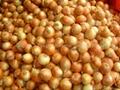 保鮮黃洋蔥