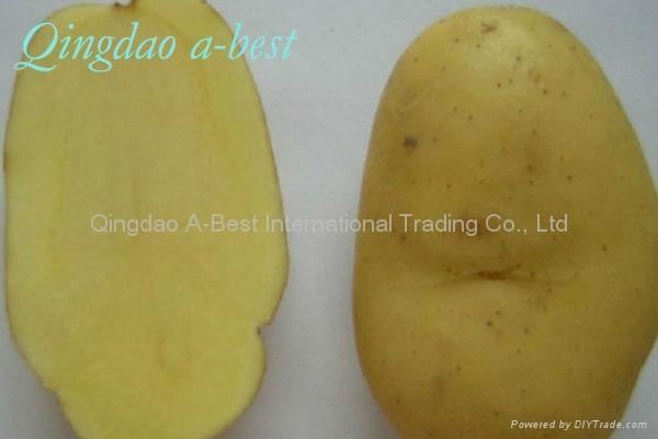 Fresh potatoes/Murphy 4