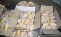 Organic Fresh potato 2