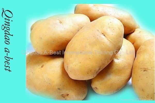 Organic Fresh potato 4