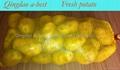 2015 crops Fresh holland potatoes 5