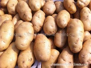 保鲜土豆 2