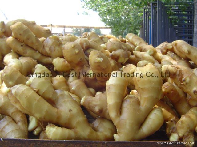 2019 Chinese Fresh Ginger 9