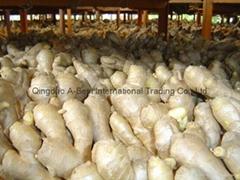 2021 Chinese Fresh Ginger