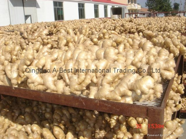 NEW ORGANIC AIR DRIED GINGER 8