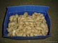 保鮮風乾姜 11