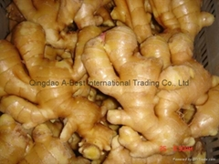 FRESH GINGER (Hot Product - 1*)
