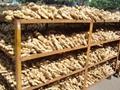 Fresh air dried ginger 3