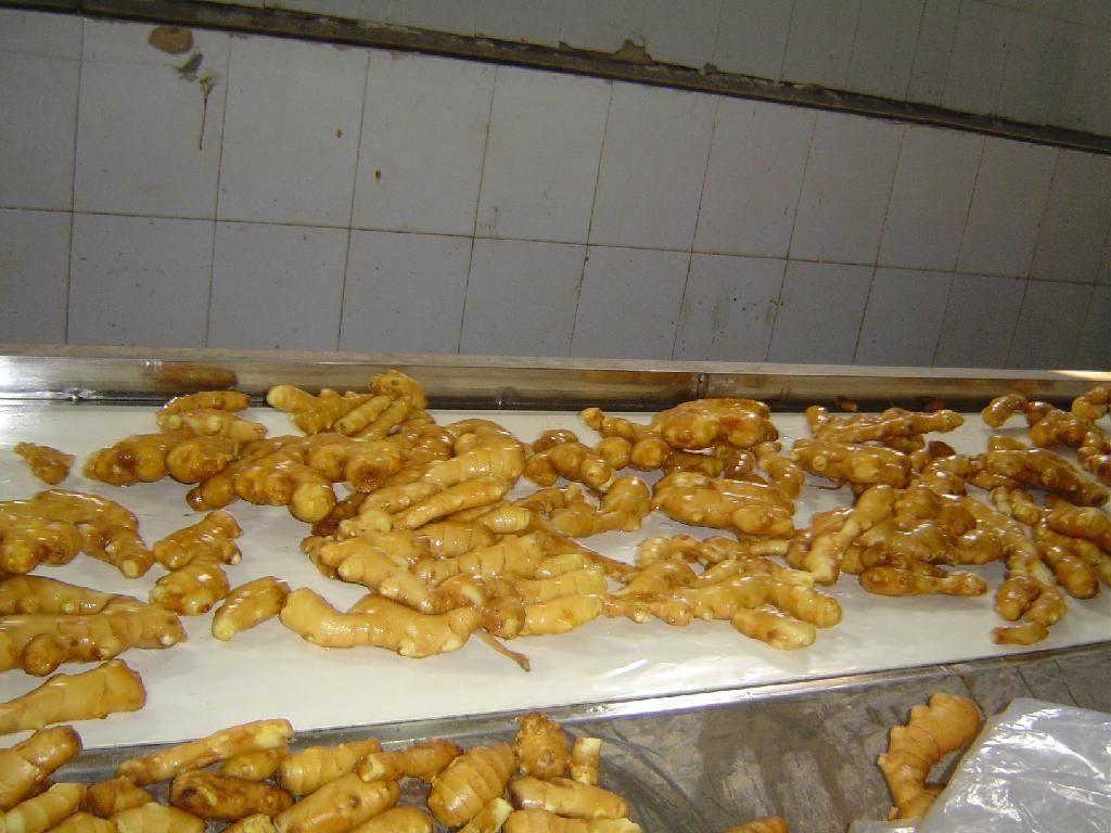 Fresh air dried ginger 10