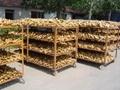 Fresh air dried ginger 5