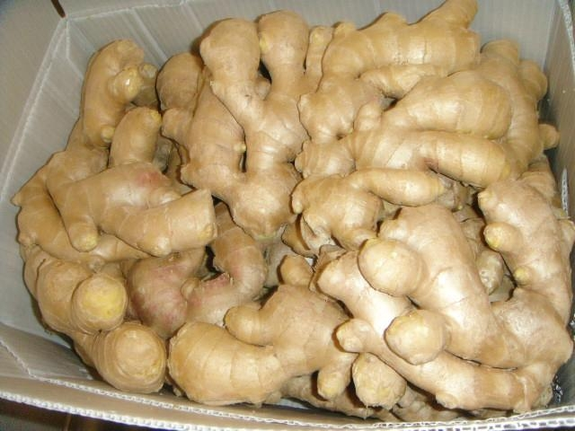 2021 new crops  AIR DRIED GINGER 6