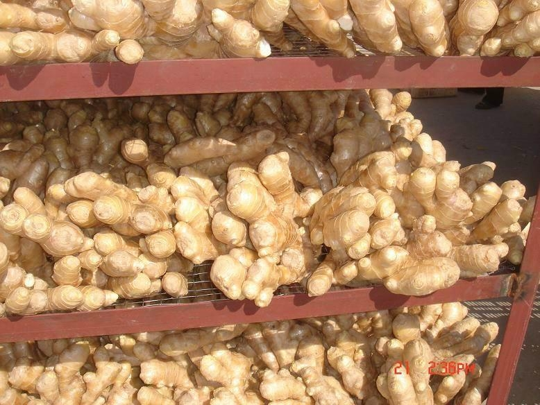 2019 new crops  AIR DRIED GINGER 12