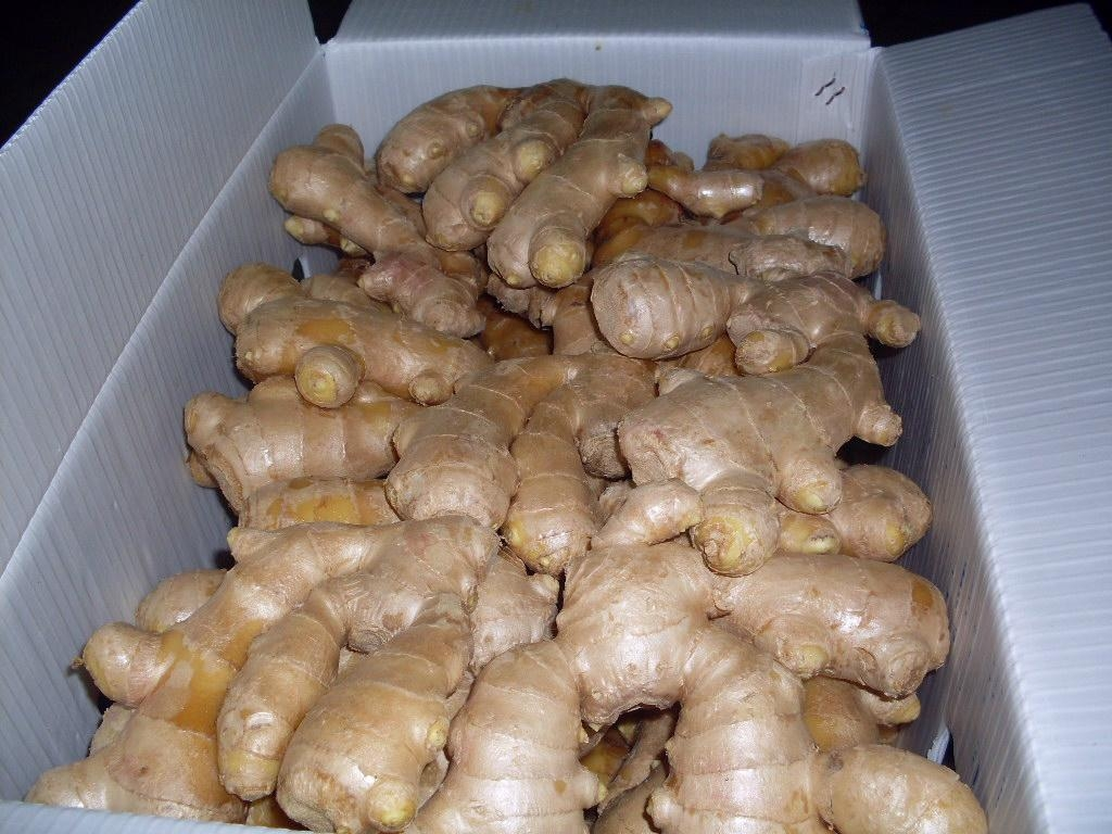 2019 new crops  AIR DRIED GINGER 15