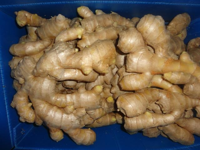 2019 new crops  AIR DRIED GINGER 14