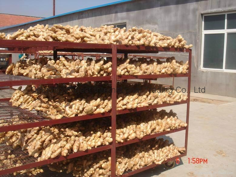 2021 BIG SIZE AIR DRIED GINGER 17