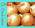 2019 CROPS FRESH YELLOW ONION